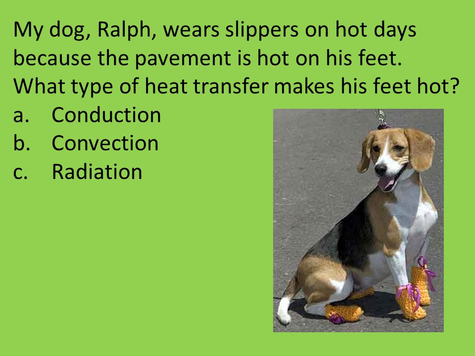 My dog, Ralph, wears slippers on hot days because the pavement is hot on his feet. What type of heat transfer makes his feet hot