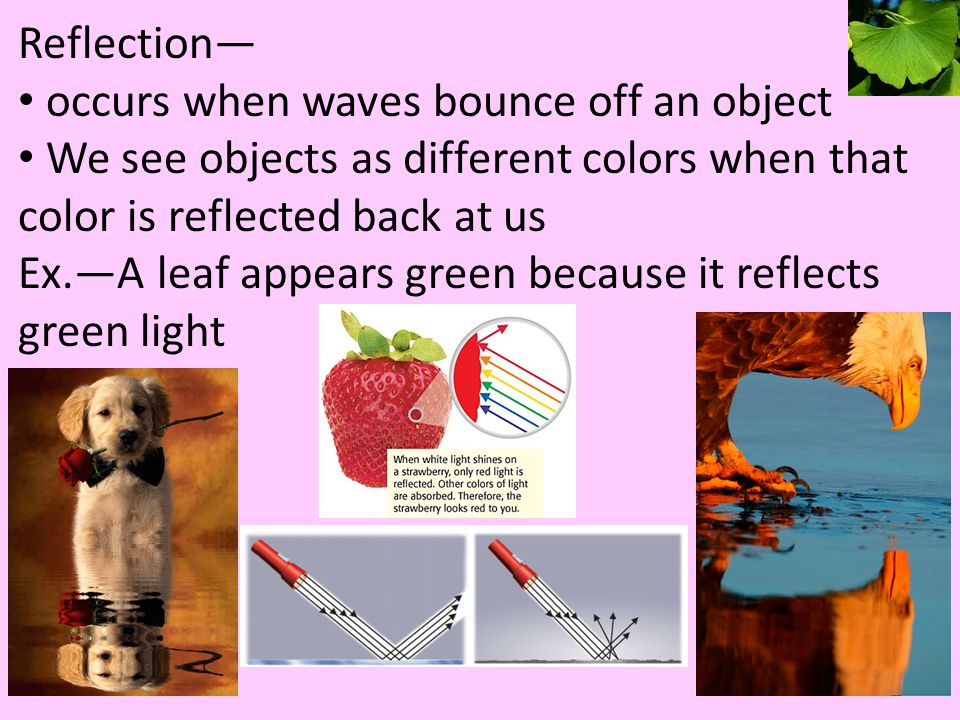 Reflection— occurs when waves bounce off an object. We see objects as different colors when that color is reflected back at us.