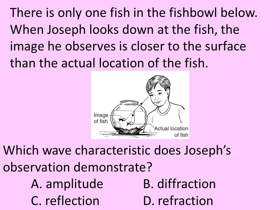 There is only one fish in the fishbowl below