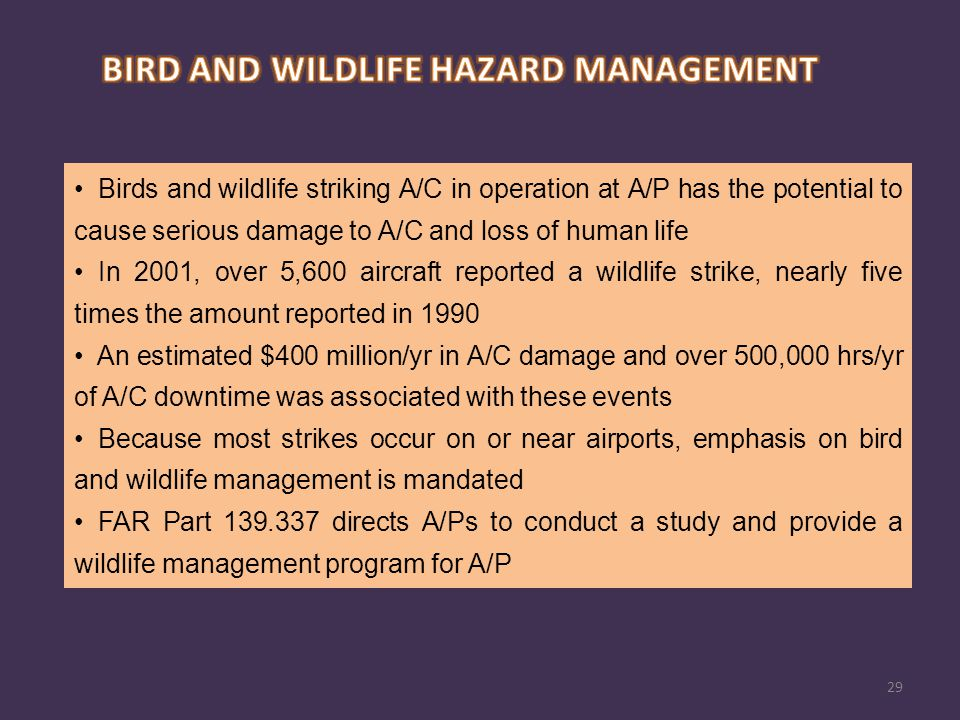 BIRD AND WILDLIFE HAZARD MANAGEMENT