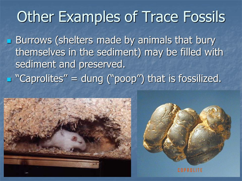 Other Examples of Trace Fossils