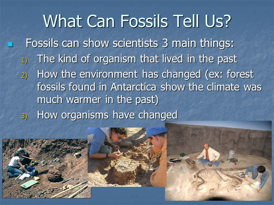 What Can Fossils Tell Us