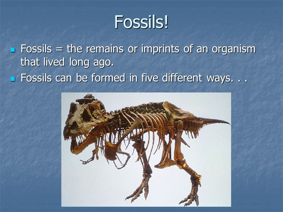 Fossils. Fossils = the remains or imprints of an organism that lived long ago.