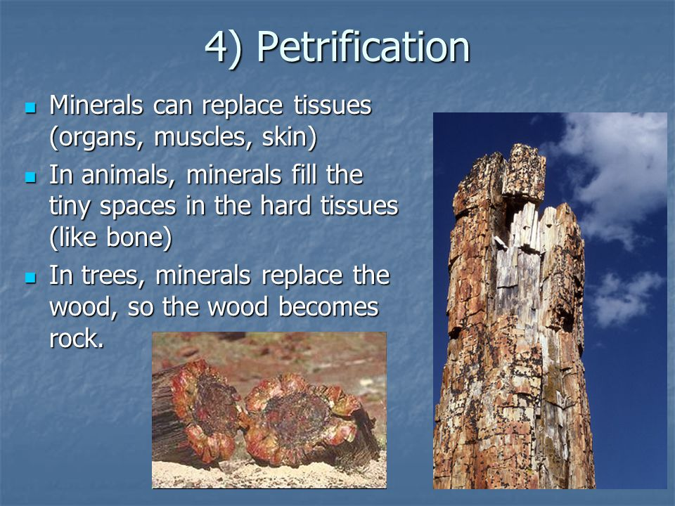 4) Petrification Minerals can replace tissues (organs, muscles, skin)