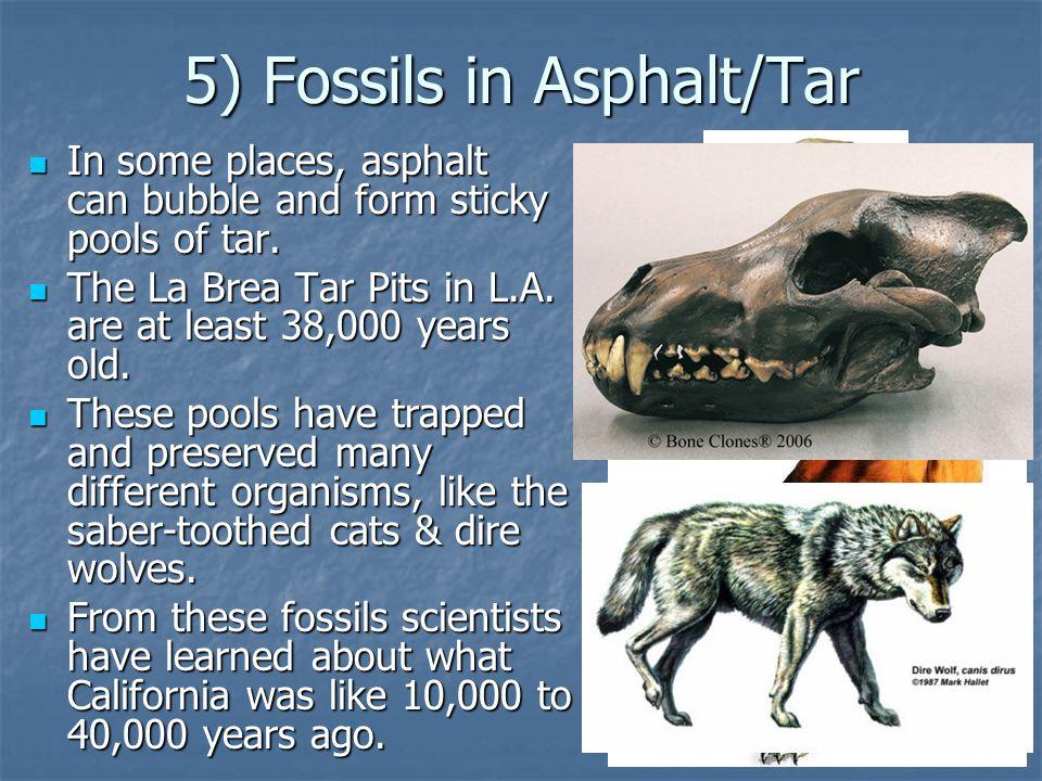 5) Fossils in Asphalt/Tar