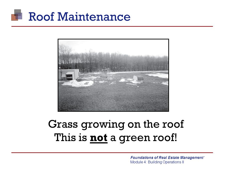 Grass growing on the roof