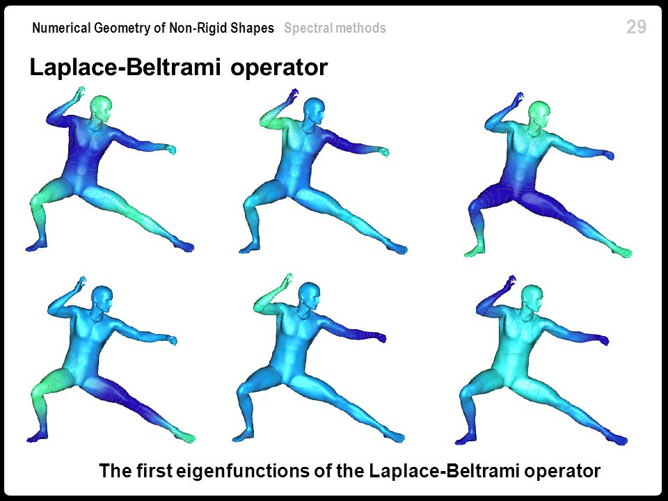 The first eigenfunctions of the Laplace-Beltrami operator