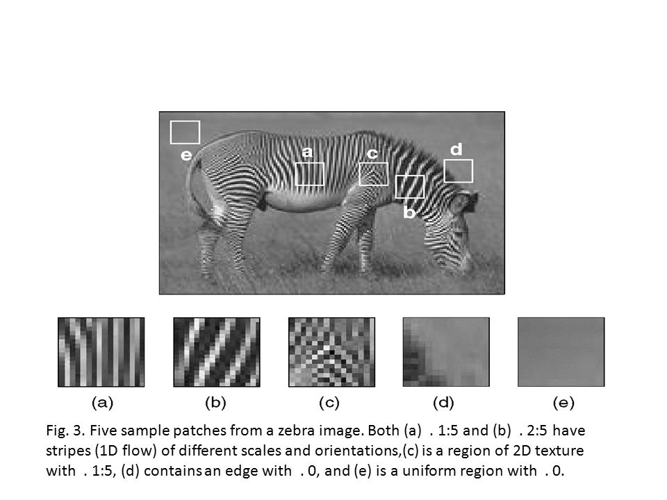 Fig. 3. Five sample patches from a zebra image. Both (a). 1:5 and (b)