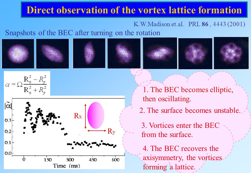 Direct observation of the vortex lattice formation
