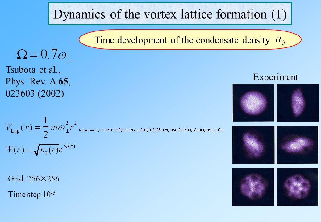 Dynamics of the vortex lattice formation (1)