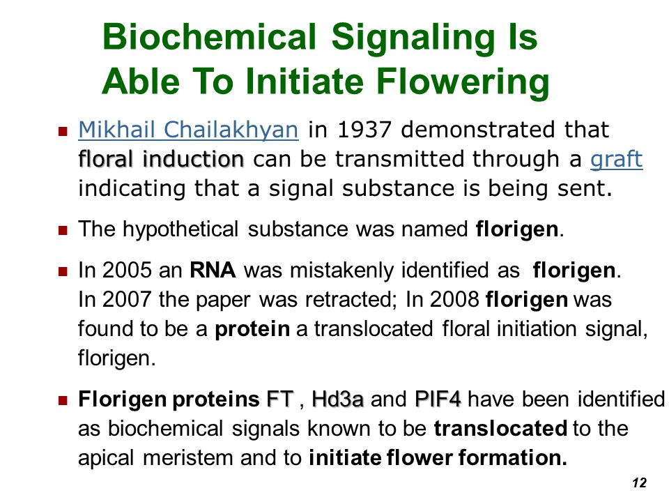 Biochemical Signaling Is Able To Initiate Flowering