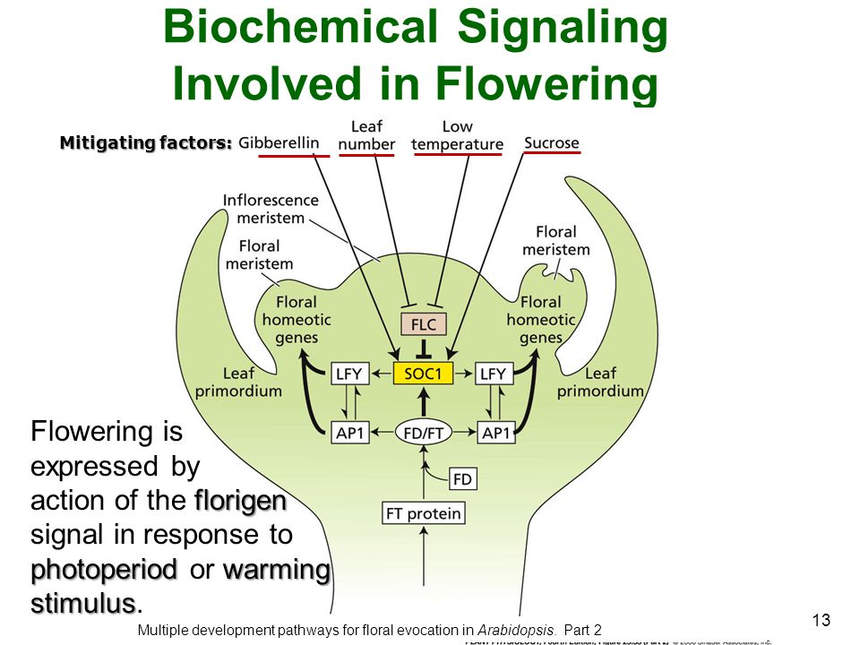 Biochemical Signaling Involved in Flowering