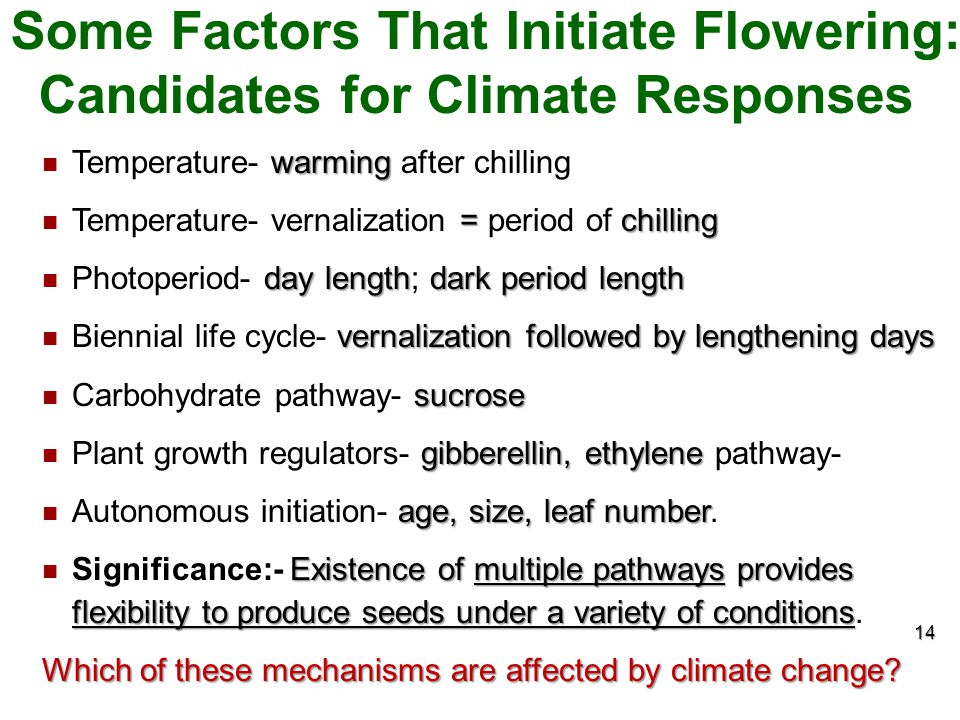 Some Factors That Initiate Flowering: Candidates for Climate Responses
