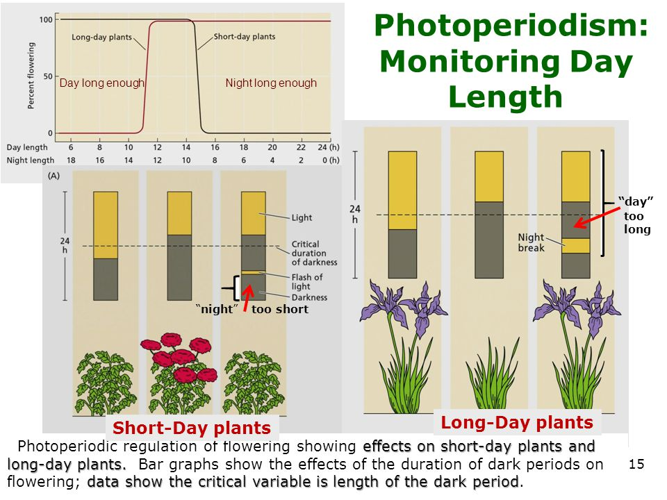 Photoperiodism: Monitoring Day Length