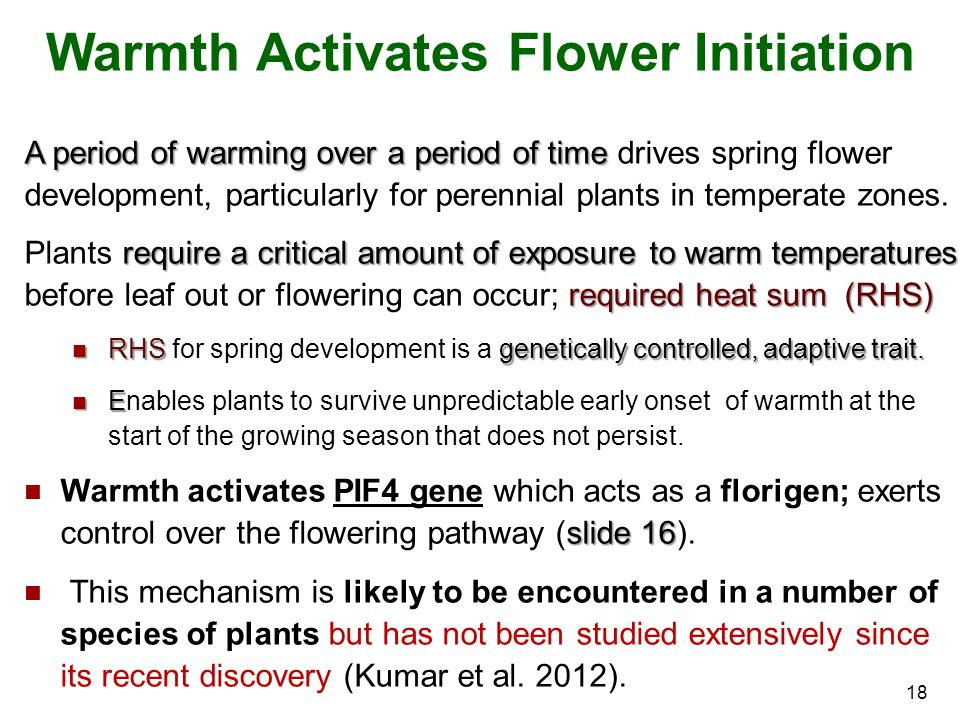 Warmth Activates Flower Initiation