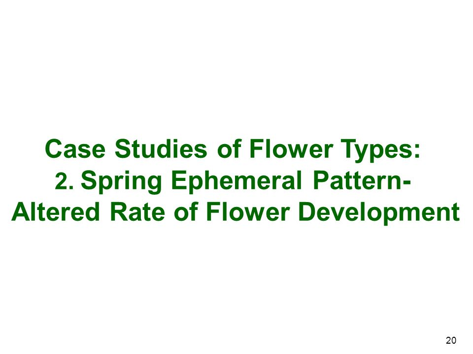 Case Studies of Flower Types: Altered Rate of Flower Development
