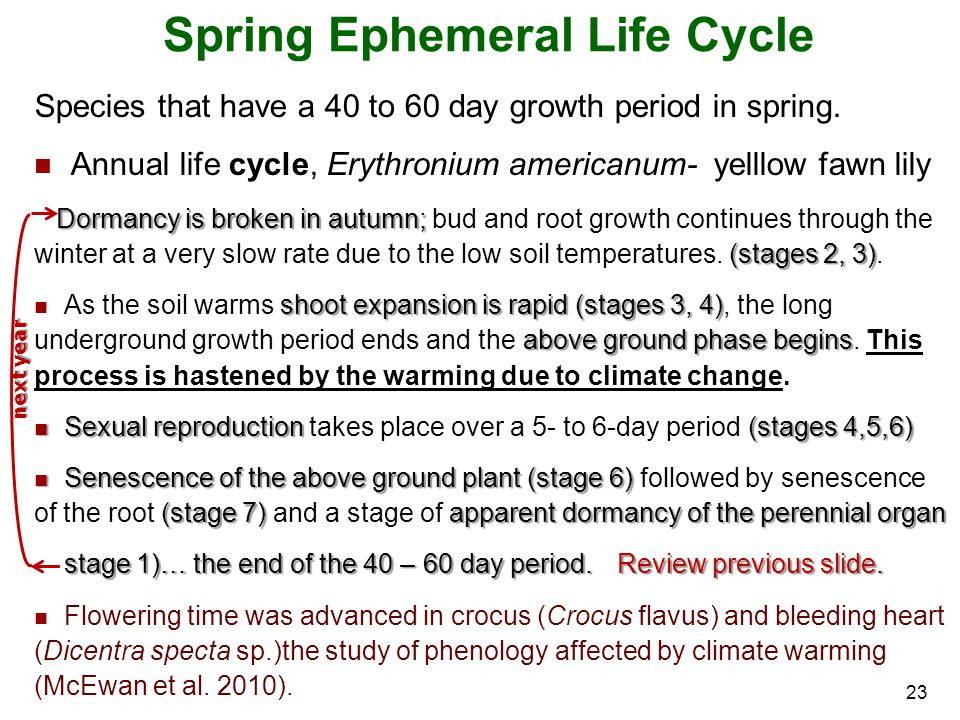 Spring Ephemeral Life Cycle