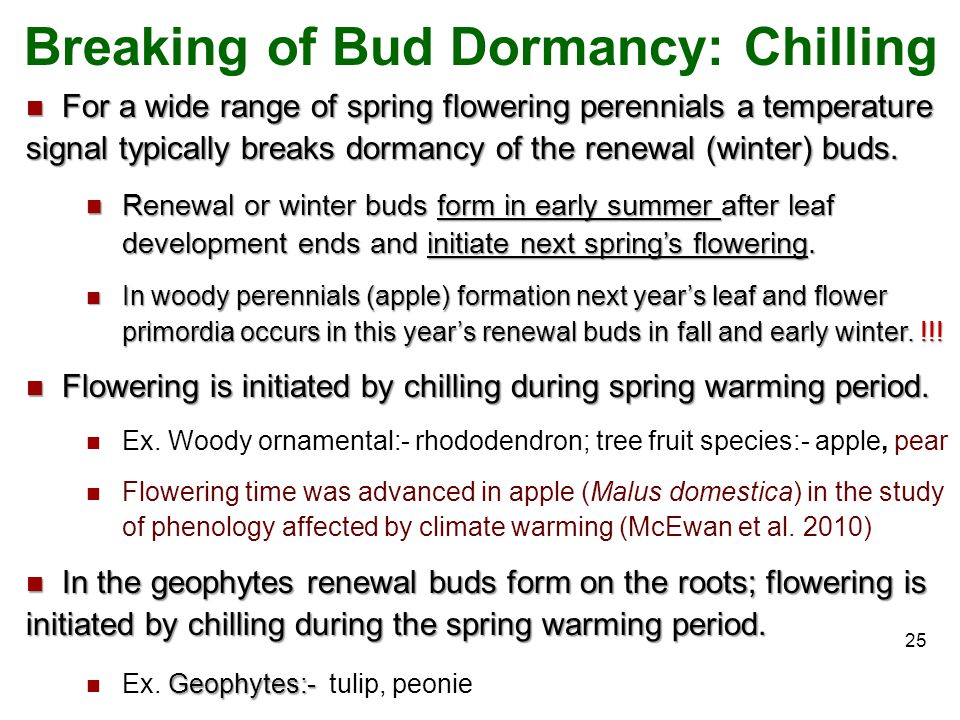 Breaking of Bud Dormancy: Chilling