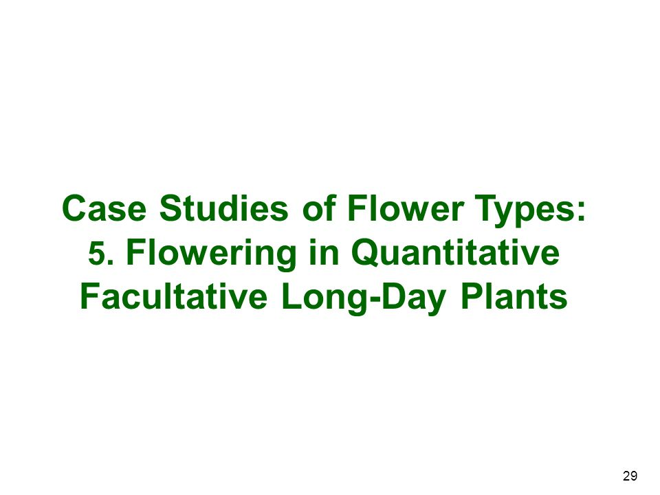 Case Studies of Flower Types: