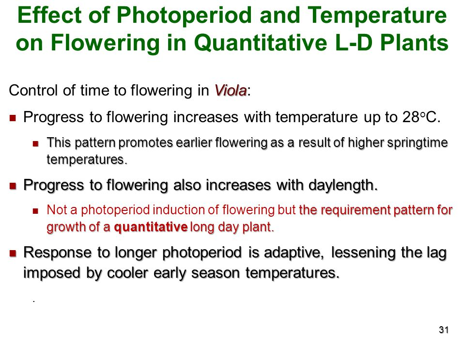 Effect of Photoperiod and Temperature on Flowering in Quantitative L-D Plants