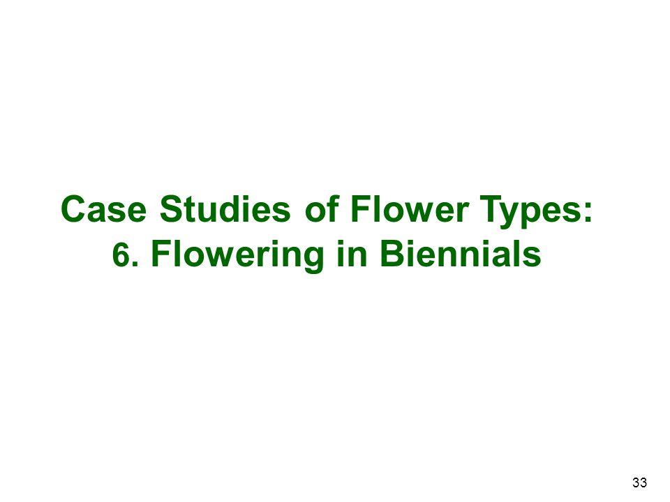 Case Studies of Flower Types: 6. Flowering in Biennials