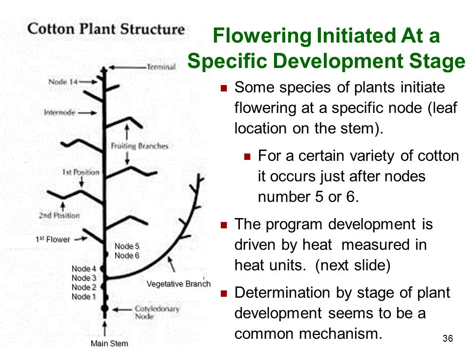 Flowering Initiated At a Specific Development Stage