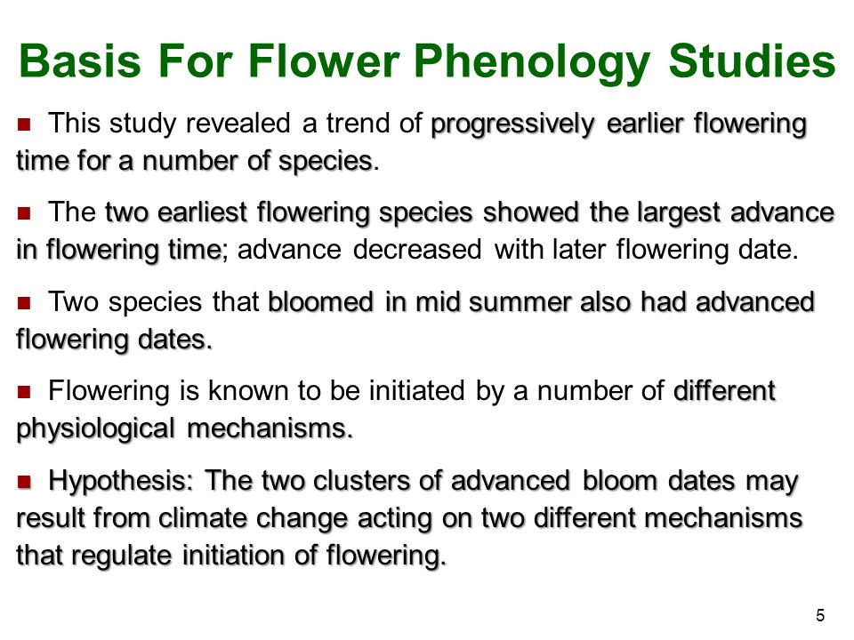 Basis For Flower Phenology Studies