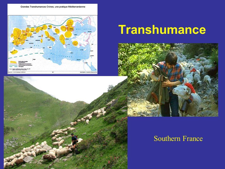 Transhumance Southern France