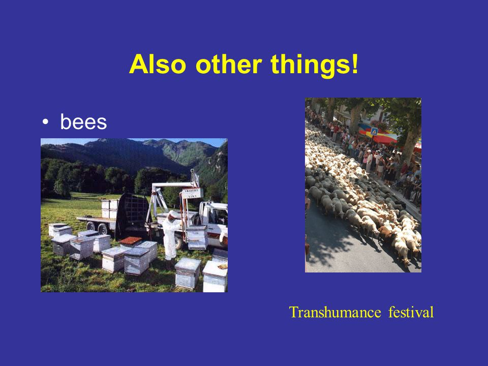 Also other things! bees Transhumance festival