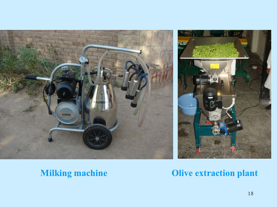 Olive extraction plant