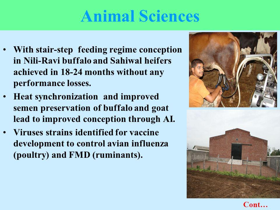 Animal Sciences
