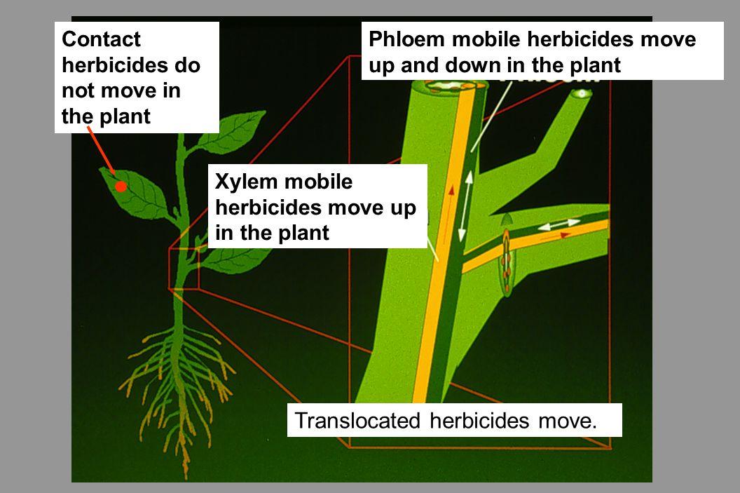 Translocated herbicides move.