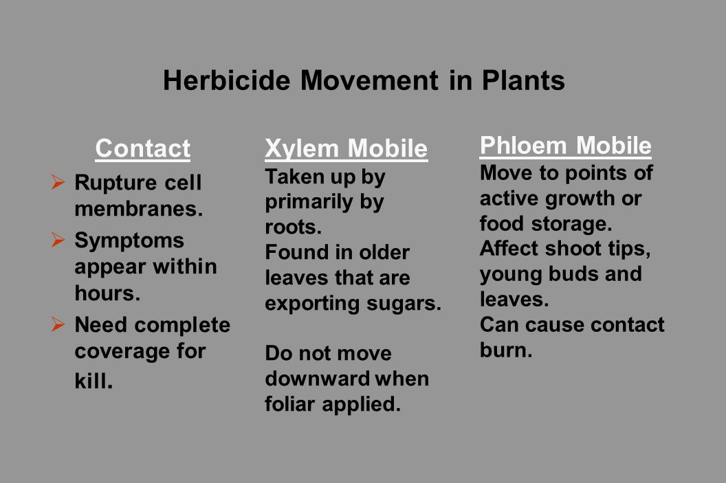 Herbicide Movement in Plants