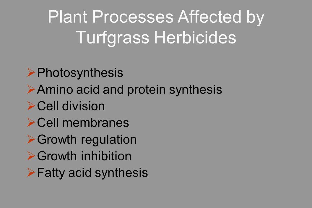 Plant Processes Affected by Turfgrass Herbicides