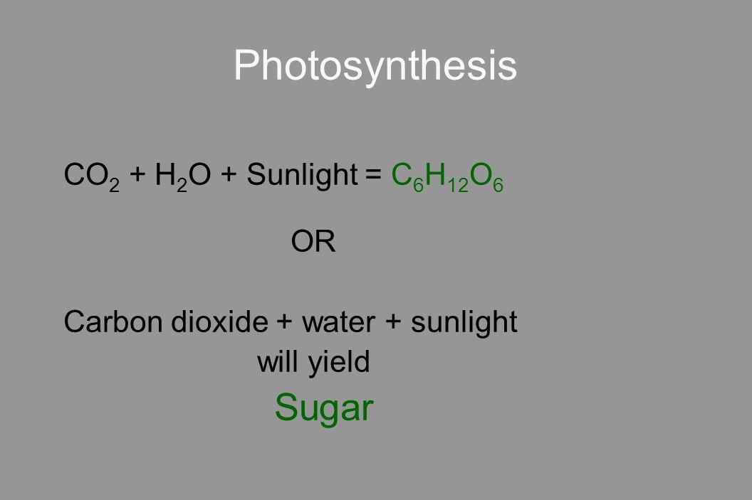 Photosynthesis CO2 + H2O + Sunlight = C6H12O6 OR