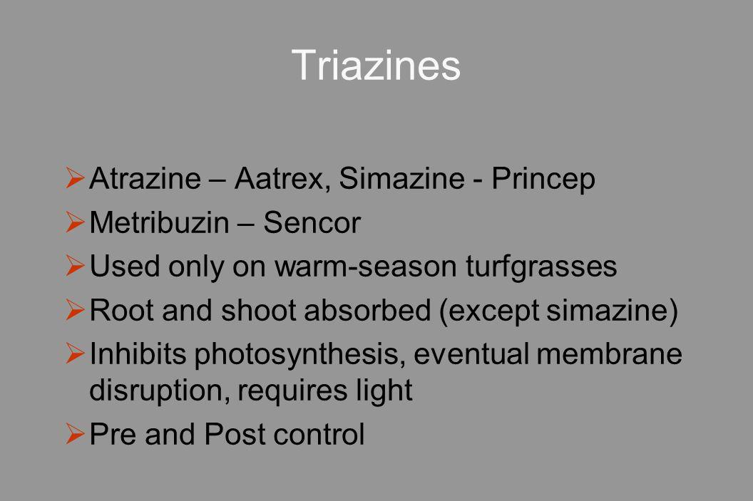 Triazines Atrazine – Aatrex, Simazine - Princep Metribuzin – Sencor