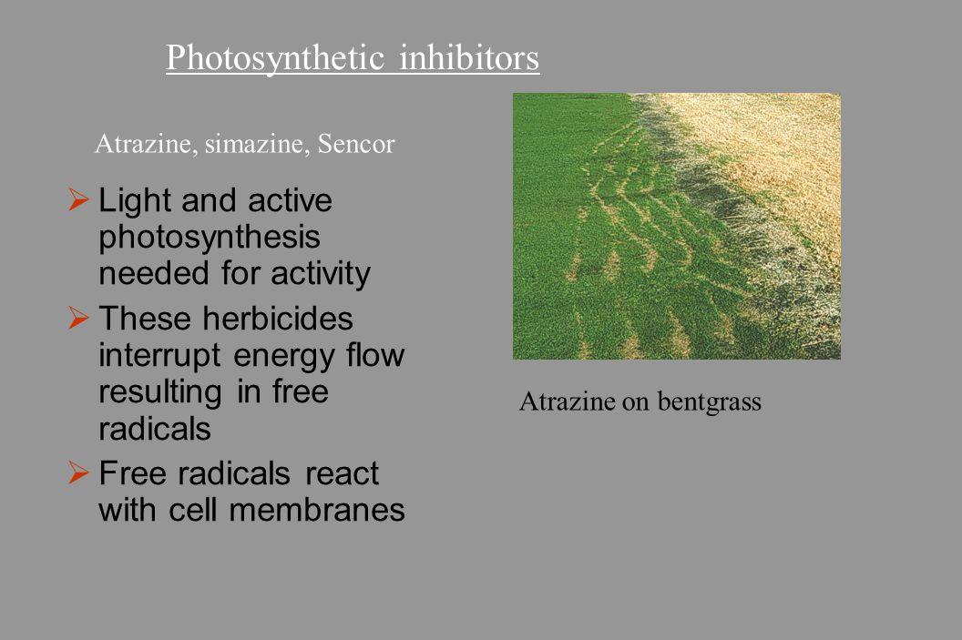 Photosynthetic inhibitors