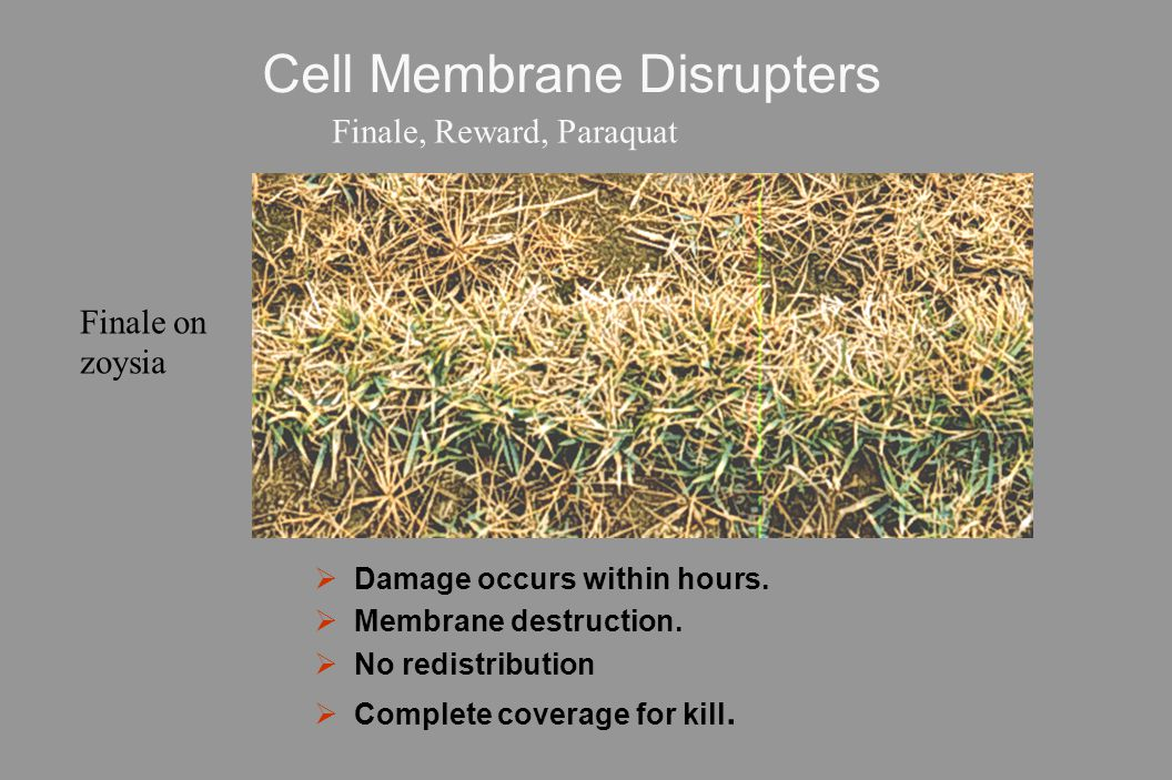 Cell Membrane Disrupters