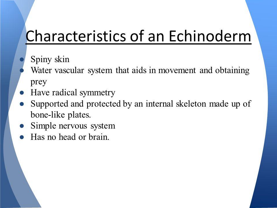 Characteristics of an Echinoderm