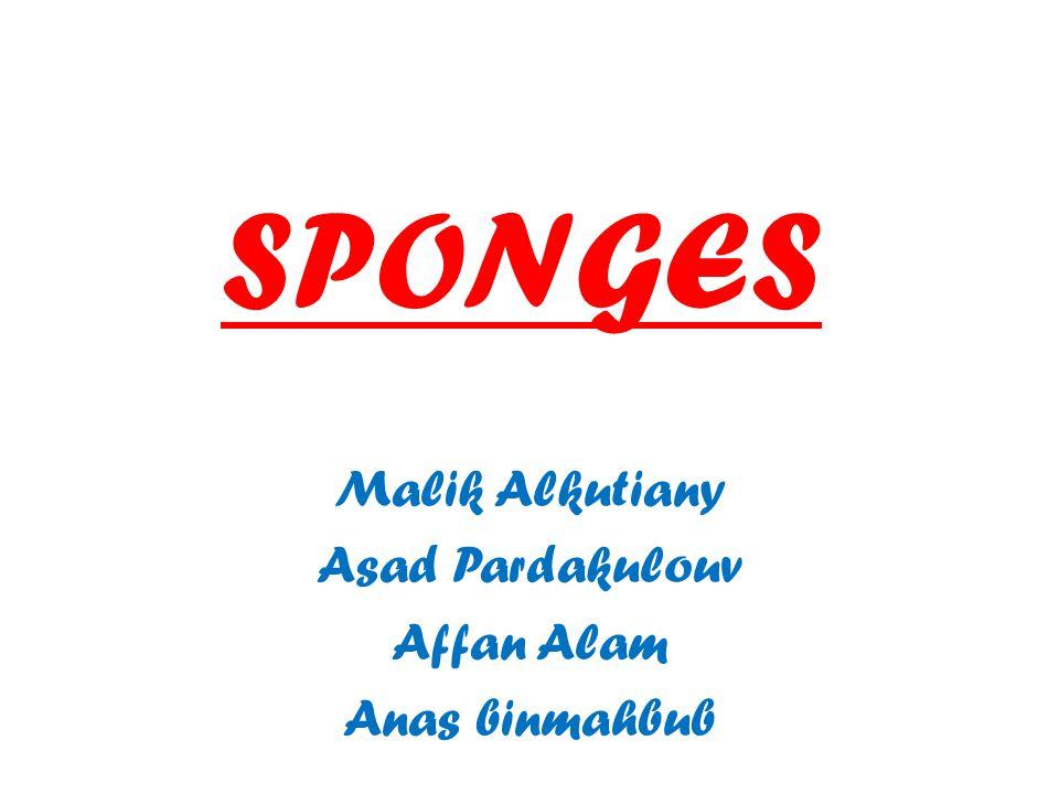 Malik Alkutiany Asad Pardakulouv Affan Alam Anas binmahbub