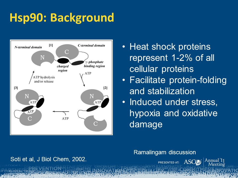 Hsp90: Background Heat shock proteins represent 1-2% of all cellular proteins. Facilitate protein-folding and stabilization.