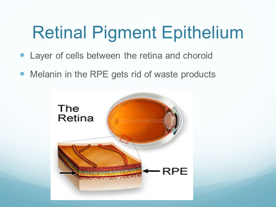 Retinal Pigment Epithelium