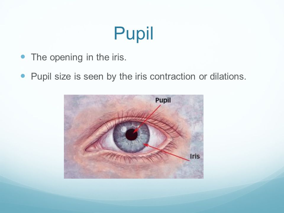 Pupil The opening in the iris.