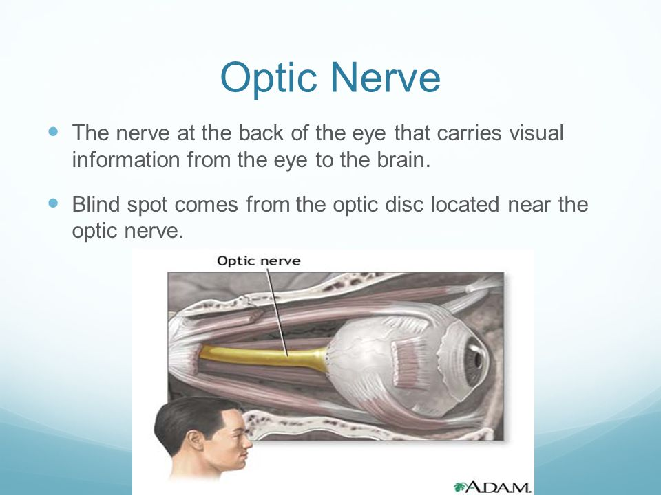 Optic Nerve The nerve at the back of the eye that carries visual information from the eye to the brain.
