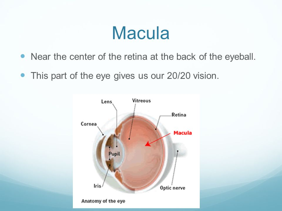 Macula Near the center of the retina at the back of the eyeball.