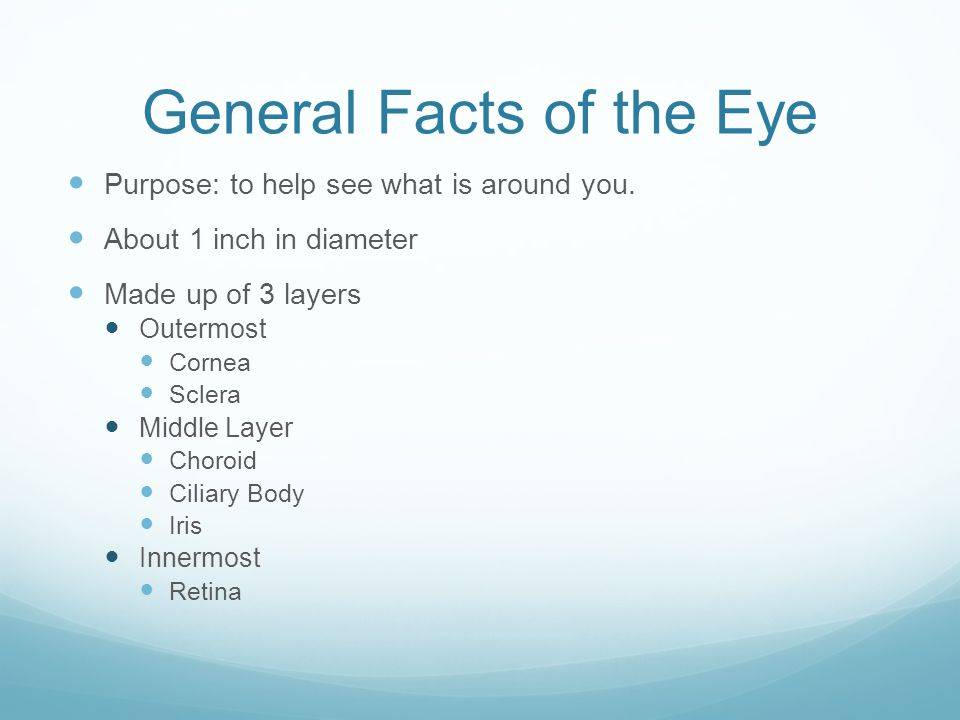 General Facts of the Eye