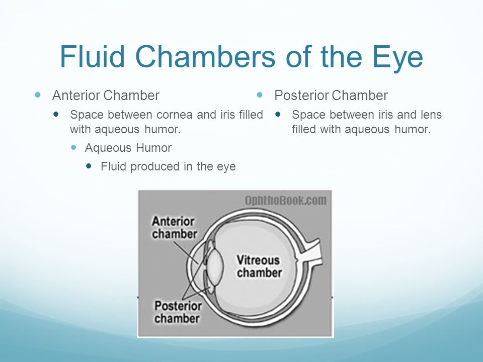 Fluid Chambers of the Eye