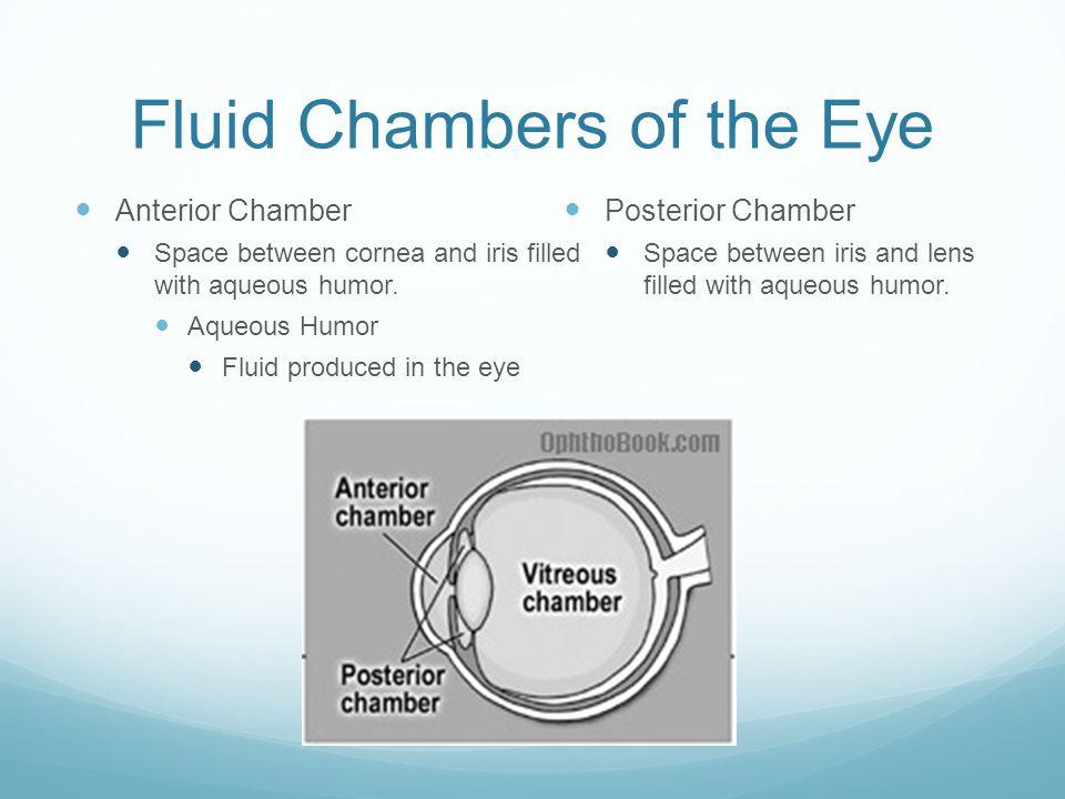 Fluid Chambers of the Eye