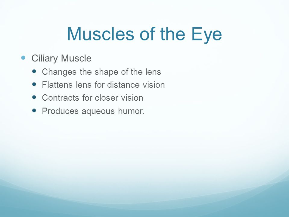 Muscles of the Eye Ciliary Muscle Changes the shape of the lens