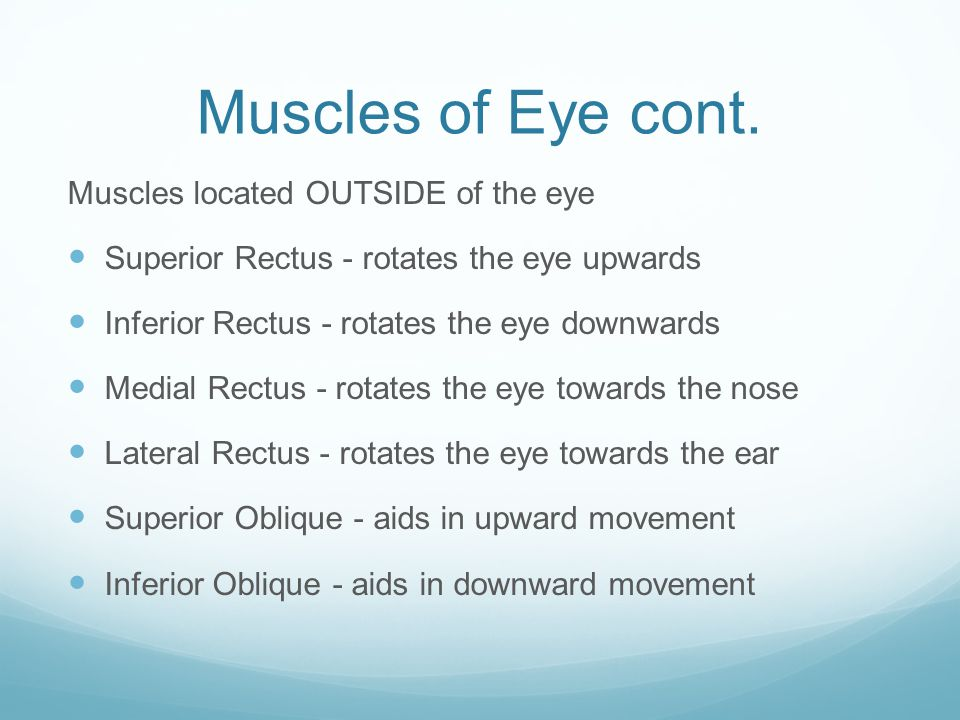 Muscles of Eye cont. Muscles located OUTSIDE of the eye